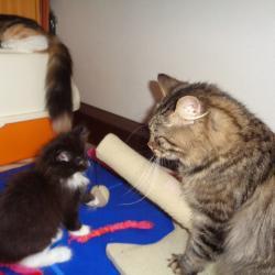 Malilou surveillée par son père...