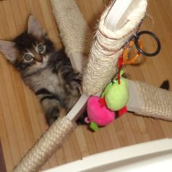 Ballerine acrobate!