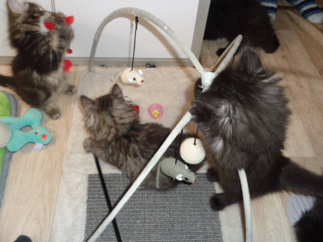 Jardin de chatons...