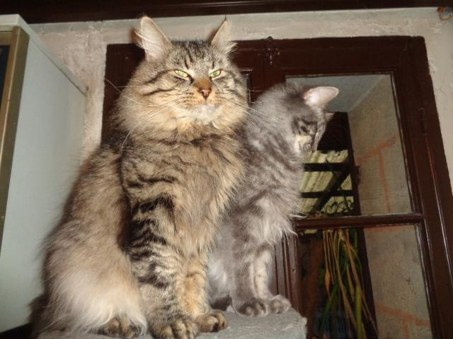 Isatis-Ionis (et Pastel) posent pour vous!