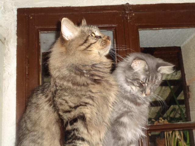 Isatis-Ionis et Pastel...
