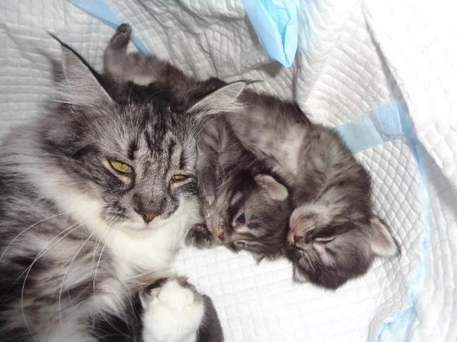 Papaye et 2 bibous...