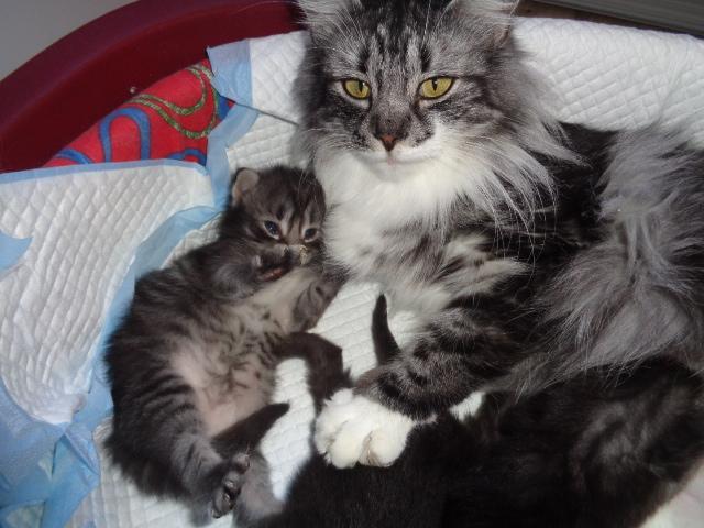 Maman et Santana: câlinou...