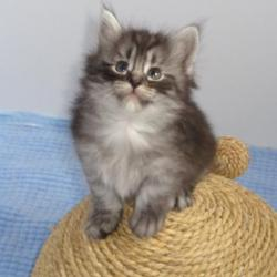 Ô Santana, adorable roudoudou!