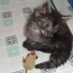 A moi la souris!