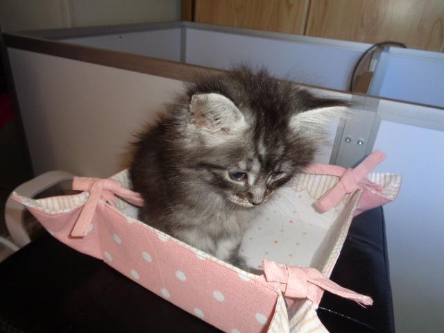 Paquet cadeau!