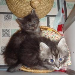 Sandro et Santana: panier garni!!!