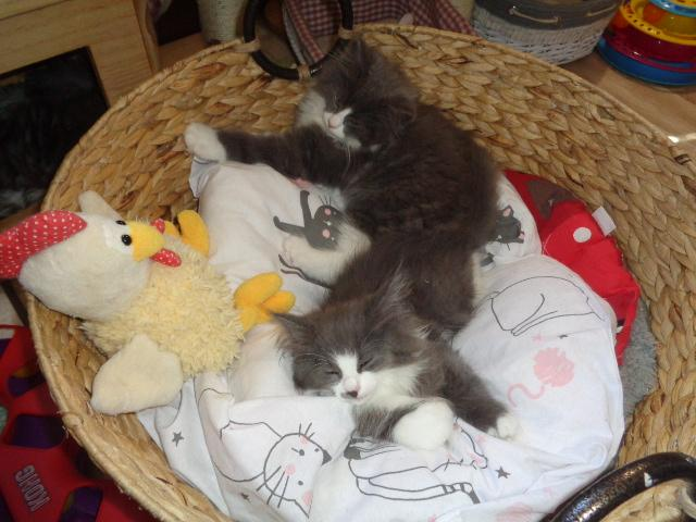 SANTAL et, devant, SUSHI dans le même nid!