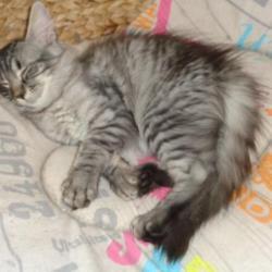 Le chat...dort!