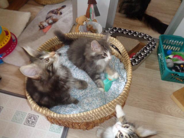 Super triplet (curieux!!!)