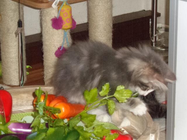 Je défends les légumes (écolo!)!