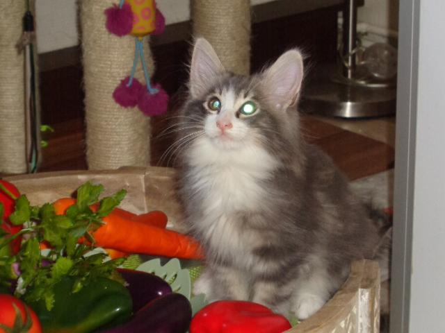 Shelsy dans les carottes!
