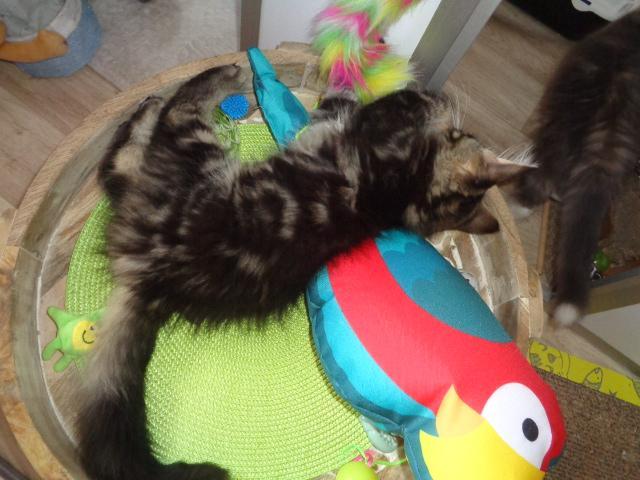 Bataille avec le papagail!