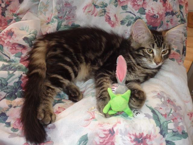Avec mon lapin!