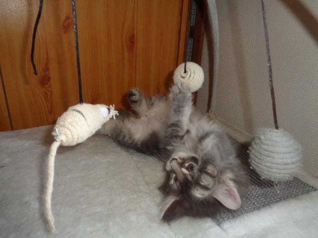 RELSON gymnaste!