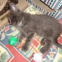 ROBINSON: plein sommeil!