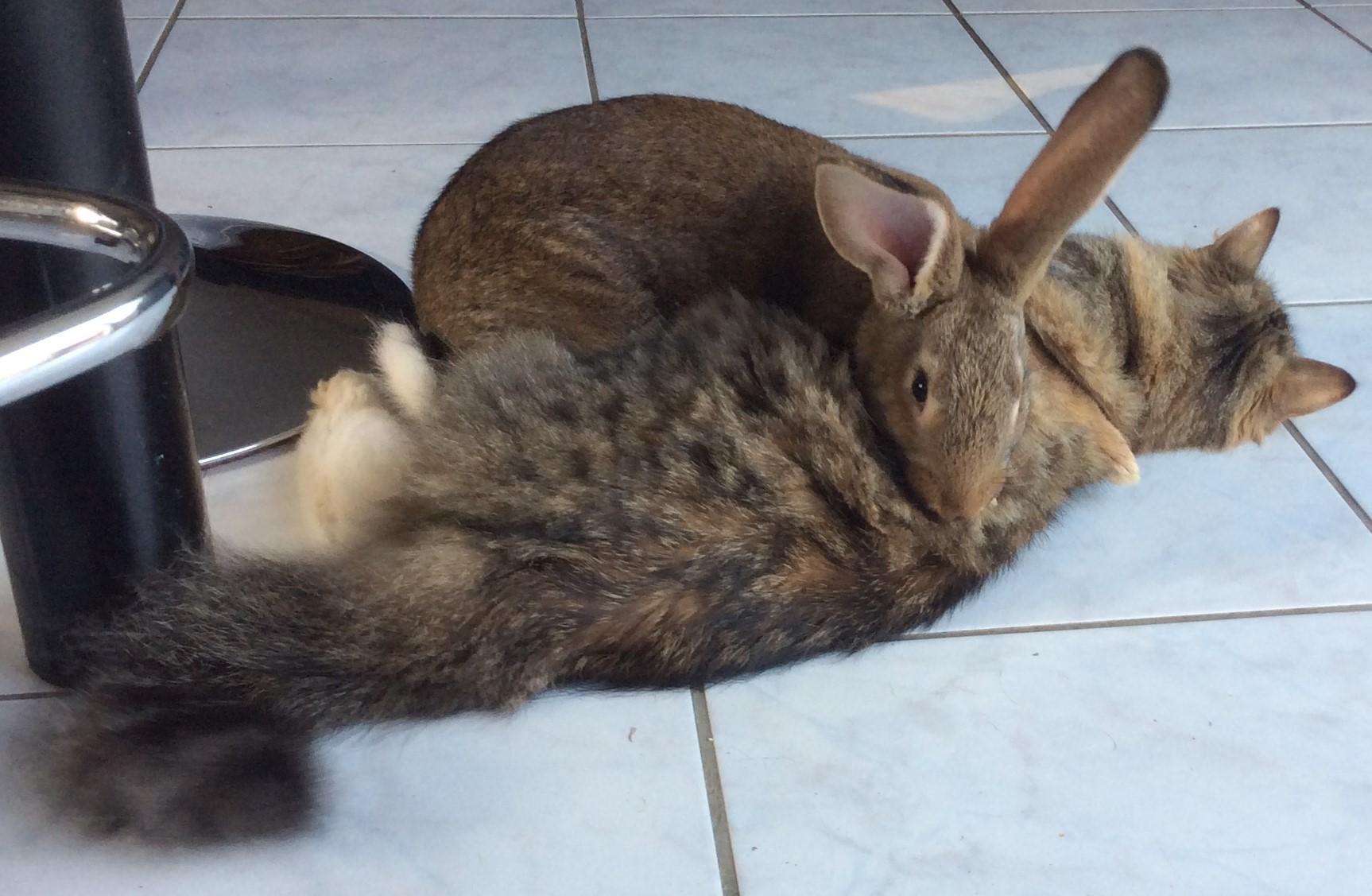 Melba et son copain lapin!