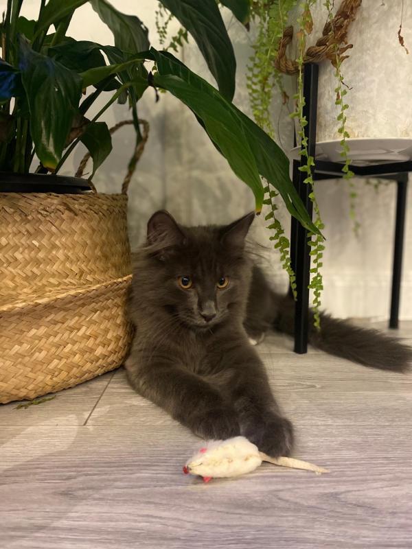 Robinson (5 mois)